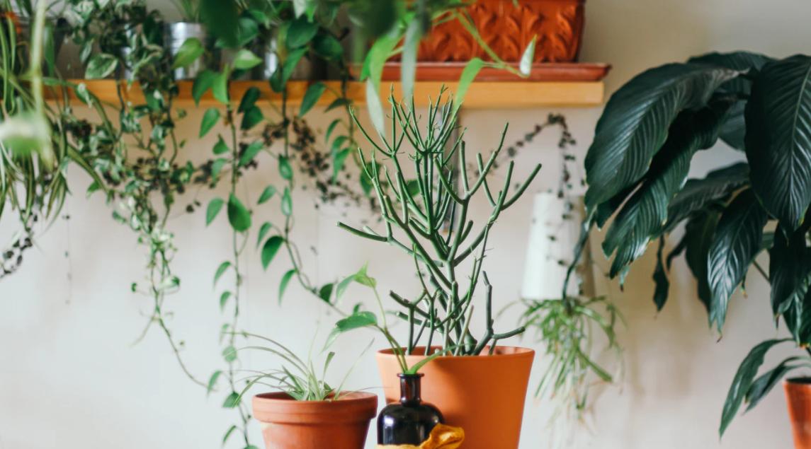 Pflanzen im heimischen Wohnzimmer