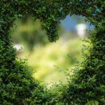 Deine grüne Oase – Tolle Ideen für deinen Garten