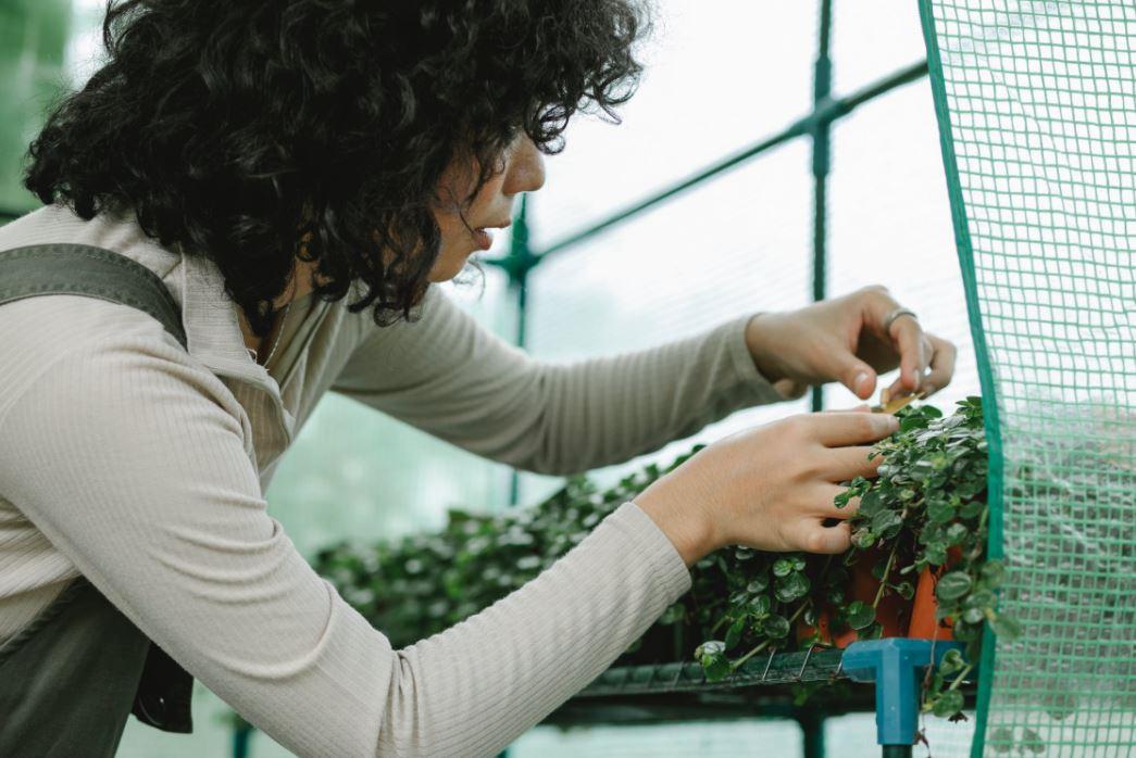Garten winterfest machen: So geht es